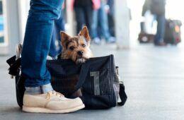 Такси для перевозки домашних животных в Крыму из аэропорта Симферополя.